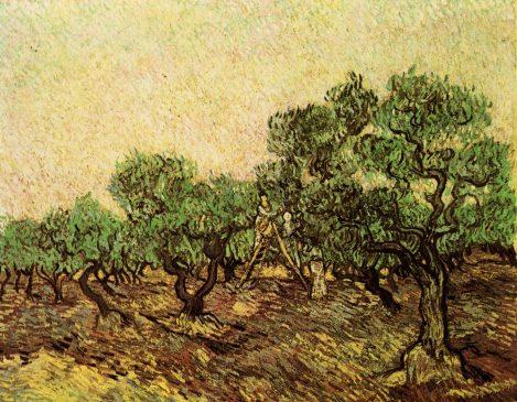 Olive Picking, 1899, Vincent van Gogh